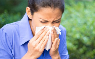 How to survive the hayfever season!