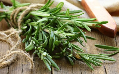 Featured Herb: Rosemary